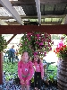 pink_girls_pink_flowers
