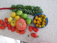 garden_bounty